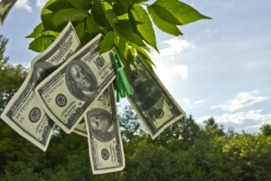 Even if money grew on trees, we'd still have to organize it.