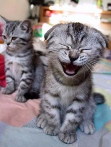 cat-laughing
