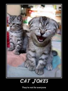 cat-jokes-are-not-for-everyone