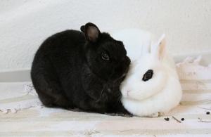 a bunny pair