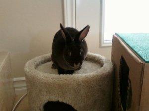 Whiskey Bandit Bunny_carpet house