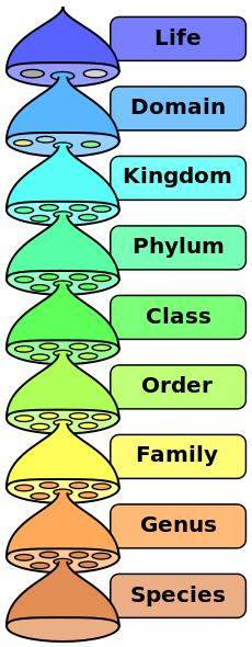 230px-Biological_classification_L_Pengo_vflip.svg