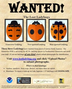 MN DNR Lost Ladybug Project poster